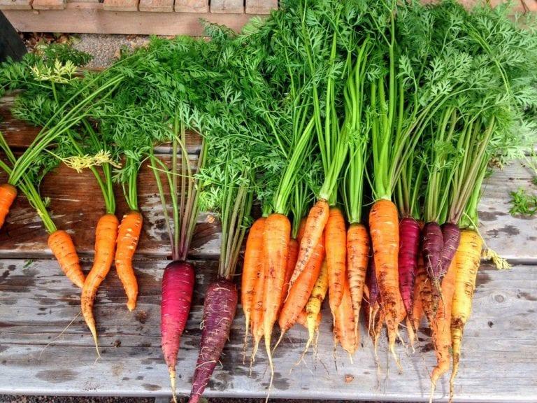 carrot, carrots, produce