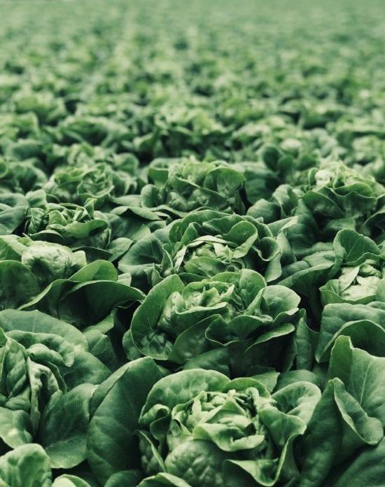 leafy greens full of minerals
